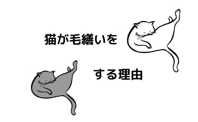 猫 毛繕い