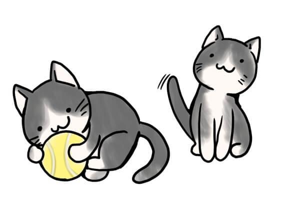 猫 ボール